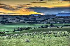 Peace in the pasture (Kevin_Jeffries) Tags: newzealand rural landscape pasture dreams southcanterbury waimate landscapesdreams