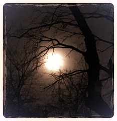 (MellyMoo74) Tags: trees moon sillouette