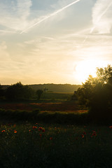 DSC04597 (wheelsy1) Tags: walking derbyshire poppy chesterfield sheepbridge poppyfield unstone richardwiles