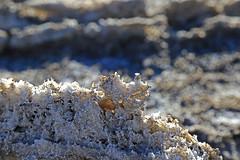 River of Salt, Death Valley (3) (Bob Palin) Tags: california 15fav usa southwest 510fav canon river landscape desert outdoor salt deathvalley badwater westsideroad devilsgolfcourse 100vistas instantfave canonef24105mmf4lisusm orig:file=2016012704437