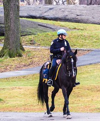 NYPD - Giddy-Up! (ZoK) Tags: horse outdoors centralpark nypd patrol bluehelmet equestrianofficer