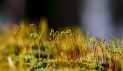 macro moss with old lens Helios (aksielza) Tags: image astounding macrodreams