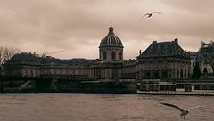 Envol  de Paris (sandrinebodiguel) Tags: paris seine mouette