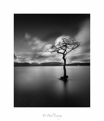 Moody Tree (Paul S Ewing) Tags: longexposure blackandwhite bw tree water mono scotland moody loch lomond milarrochy