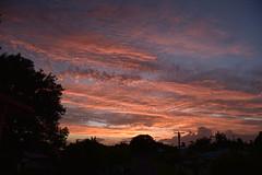 Orange Sunset (Dreaming of the Sea) Tags: nikon d5500 dusk sky storm sunset trees twilight pink pinksunset red redsunset gold goldensunset blue bluesky powerlines clouds landscape topf25 nikonclubit 1000v40f 7dwf