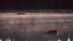 Mist Beam (trm42) Tags: morning autumn mist lake rocks frost beams seinjoki syksy 1c pohjanmaa hirvijrvi aamu etelapohjanmaa
