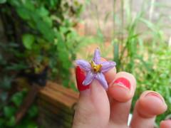 75/366 Simple (JessicaBelotto) Tags: flower macro planta ar flor ao fotografia simple projeto livre mo pequena fotogrfico florzinha singelo