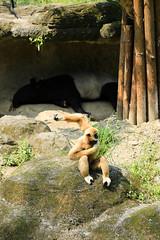 (ina070) Tags: animals     taipeizoo  canon6d