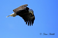 Hovering Over The River