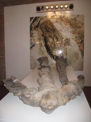 COMACCHIO - Museo della Nave Romana (Roman Shipwreck Museum): Remains of the anchor (Andra MB) Tags: italien italy vacances italia roman urlaub shipwreck italie emiliaromagna 2015 vacanta concediu epave epava commachio