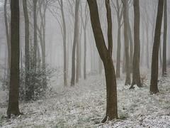 March Magic (Damian_Ward) Tags: wood trees winter mist snow misty fog forest photography chilterns buckinghamshire foggy bucks wendover astonhill thechilterns chilternhills wendoverwoods damianward ©damianward