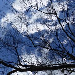 P1120962 (erix!) Tags: clouds branches wolken bluesky ste twigs blauerhimmel zweige