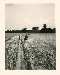 Two dogs running down a dirt road