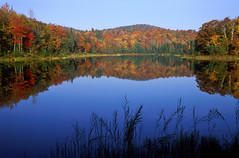 New England Autumn Pond (EducationUSA Photo Albums) Tags: blue autumn red sky orange usa mountain lake plant black tree green nature water leaves yellow horizontal forest season landscape outdoors photography stand leaf pond bush woods flora colorful vermont view grove scenic newengland wideangle nobody foliage northamerica backcountry environment daytime wilderness multicolored clearsky parklands greenmountains tranquilscene vibrantcolor calmwater colorimage beautyinnature deciduoustree greenmountainsnationalforest easternusa otherkeywords