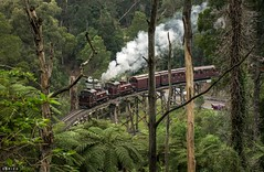 Return (Dobpics O'Brien) Tags: trestle bridge train engine rail railway victoria steam na pbr locomotive belgrave 7a puffingbilly 12a pbps