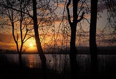 through the trees on tay II-4210261 (E.........'s Diary) Tags: sunset reflection river scotland fife calm tay eddie newburgh rossolympusomdem5markiiscotlandapril2016newbur rossolympusomdem5markiiscotlandapril2016newburghfifespring