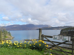 View from Craig near Plockton, West Coast of Scotland,  April 2016 (allanmaciver) Tags: blue west green clouds grey coast scotland wooden spring colours post low craig loch viewpoint daffodils mainland carron applecross scnery lochcarron allanmaciver