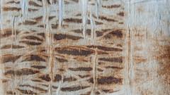 Marks (jonnydredge) Tags: rust stripes textiles eco shibori markmaking onionskins spottedhyenas