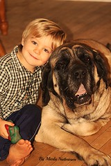 (Missed moments)...A boy and his dog (Marla Nutbrown) Tags: family boy dog pets english love loss mastiff november2014