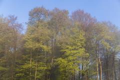 IMG_3473 (ZoRRaW photography) Tags: mist tree fog forest spring luxembourg neuhausgen