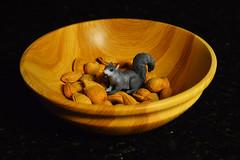 Almond Lover?! (radargeek) Tags: squirrel almonds april woodenbowl 2016 julesphotochallengegroup