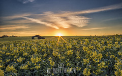 #260 of 365 - colours of summer - 010516 (Emily_Endean_Photography) Tags: flowers sun tower field architecture barn sunrise landscape countryside spring seed rape structure dorset sprig sixpenny