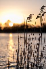 Sonnenuntergangsstimmung am Teich (webpinsel) Tags: abend sonnenuntergang natur wolken dämmerung teich landschaft abendstimmung hausdülmen