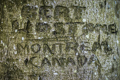 Canadians left their mark (Redheadwondering) Tags: sonya7rii spring wiltshire sigma sigma50mmdgmacro trees salisburyplain macro bark treecarving canadian 116picturesin2016 112bark 112 canadianarmy a7ii α7ii