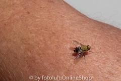 Argentinien_Insekten-81 (fotolulu2012) Tags: tierfoto