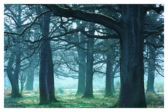 Forest (na_photographs) Tags: trees nature forest natur ste wald hudewald hutewald