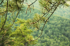 pine (erinwilt) Tags: statepark family camping trees friends camp vacation lake holiday love beach nature water beautiful animals hippies creek forest swim canon fishing woods rocks pretty pennsylvania wildlife husband best pa wife forever lovely fishers campsite holida bibleverse bfffs