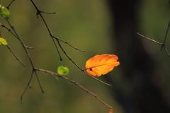 Interval (clint.mason_sa) Tags: autumn southafrica leaf krugernationalpark krugerpark