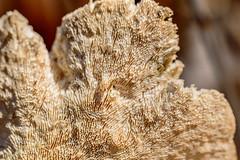 Fungi (vernonbone) Tags: park lens outside nikon sigma morningside highlandcreek d3200 april2016