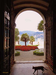A cat in Italy - Un chat en Italie (frenziM) Tags: italien summer italy lake holiday cat landscape see poetry italia lac poetic paysage malcesine gardalake gardasee romanticism romantisch romantisme lacdegarde itaalie