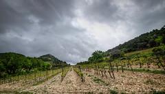 Lafare ( 84 ) (Rmi Avignon) Tags: france fr vignes lafare provencealpesctedazur