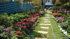 Flowerbeds aisle (Kodak Agfa) Tags: egypt spring flowers flowersfair2016 flowersshow2016 mideast middleeast giza orman ormanpark parks