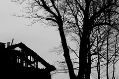 (Mikko Luntiala) Tags: trees blackandwhite bw house silhouette suomi finland dark fire death helsinki april treebranches pasila lnsipasila 2016 d600 puut siluetti huhtikuu oksat kuolema tulipalo synkk nikond600 afsnikkor2470mmf28ged mikkoluntiala puunoksat veturitie3