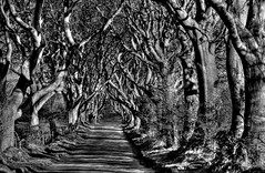 dark hedges 01fhcb (seanfderry-studenna) Tags: road county ireland sunset irish mist plant tree nature forest sunrise dark landscape alley outdoor branches tourist northern beech hedges antrim armoy dramatictonemapped gyvh