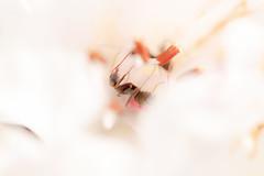ant&flower  (hiroshi_arai) Tags: flower macro nature insect ant   macrolens  60d