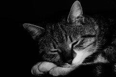Please, don't wake me, no, don't shake me Leave me where I am, I'm only sleeping (NikNak Allen) Tags: portrait blackandwhite pet white black face animal cat fur nose eyes close ears