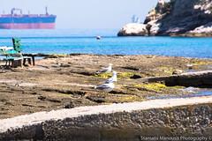 Resting in the sun (foveras13) Tags: sea island greek nikon seagull greece salamina d5200