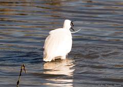 Catch (steven waddingham) Tags: fish bird rutland stevenwaddinghamphotography