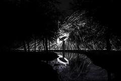 Light painting (navidmaz) Tags: longexposure light lightpainting reflection tree wool nature water night river painting exposure outdoor steel
