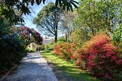 Trelissick Garden, Cornwall (Baz Richardson (trying to catch up!)) Tags: gardens cornwall nationaltrust trelissickgarden