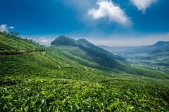Munnar landscape ([s e l v i n]) Tags: india green nature natural tea kerala greenery munnar teaestate greenearth keralatourism keralatravel picturesofkerala selvin