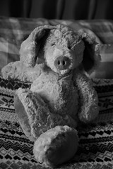 Hello! Is it me you're looking for? (chelle green) Tags: boredom blackandwhite teddy teddybear monochrome animal pose portrait