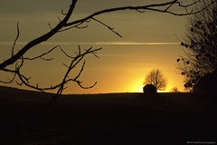 """as the sun goes down"" (B.Graulus) Tags: trees sunset sun silhouette canon landscape photography belgium belgique outdoor belgi belgica landschap 600d huldenberg"