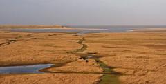 "Natuurgebied 3 ""De Slufter"" @ Texel. #Texel #slufter #natuur #nature #gebied #water #gull #Northsea #waddeneiland #wadden #Justin Sinner #pictures #seascape #landscape #Dune #dunes #eiland #island #isle #clouds #wolken #dutch #holland #netherlands #birds (JustinSinner.nl) Tags: pictures park justin seascape holland nature water netherlands dutch birds clouds landscape island wadden waddeneiland gull dunes dune natuur wolken national northsea else nothing isle parc sinner texel eiland slufter natuurmonumenten natuurgebied staatsbosbeheer nationaal gebied deslufter"