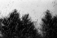 Through The Weeping Glass # 4 (SopheNic) Tags: trees blackandwhite bw film window monochrome rain 35mmfilm hp5 ilford iso1600 pushprocessed selfdeveloped minoltaxgm rokkorlens id11stock 55mmf17