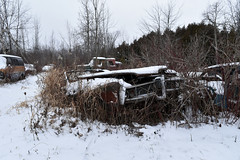 DSC_0828 v2 (collations) Tags: ontario abandoned autos derelict automobiles rockwood junkyards wreckers autowreckers autograveyards mcleansautowreckers carcemeteries